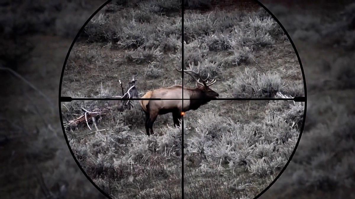 Crosshairs Hunting