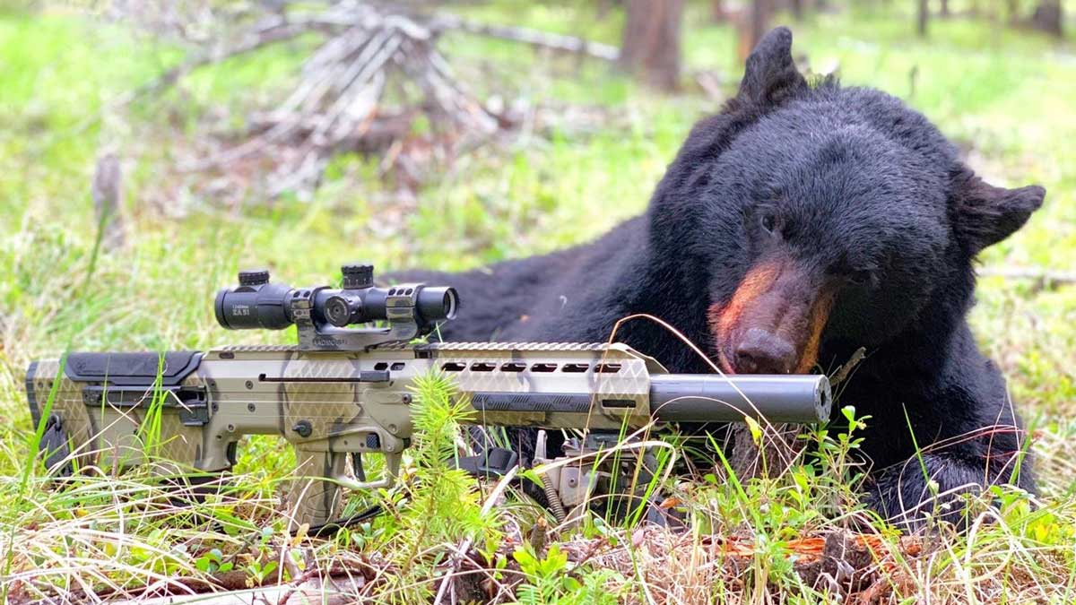 Bear in woods after a hunt