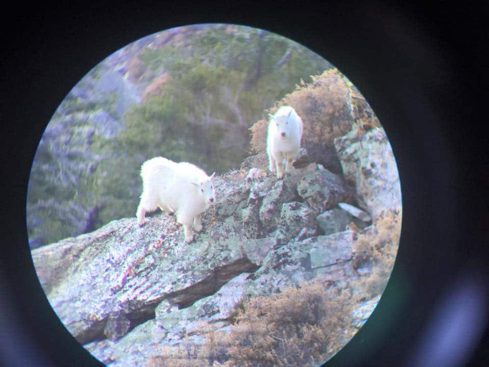 Goats on rocks in the mountains