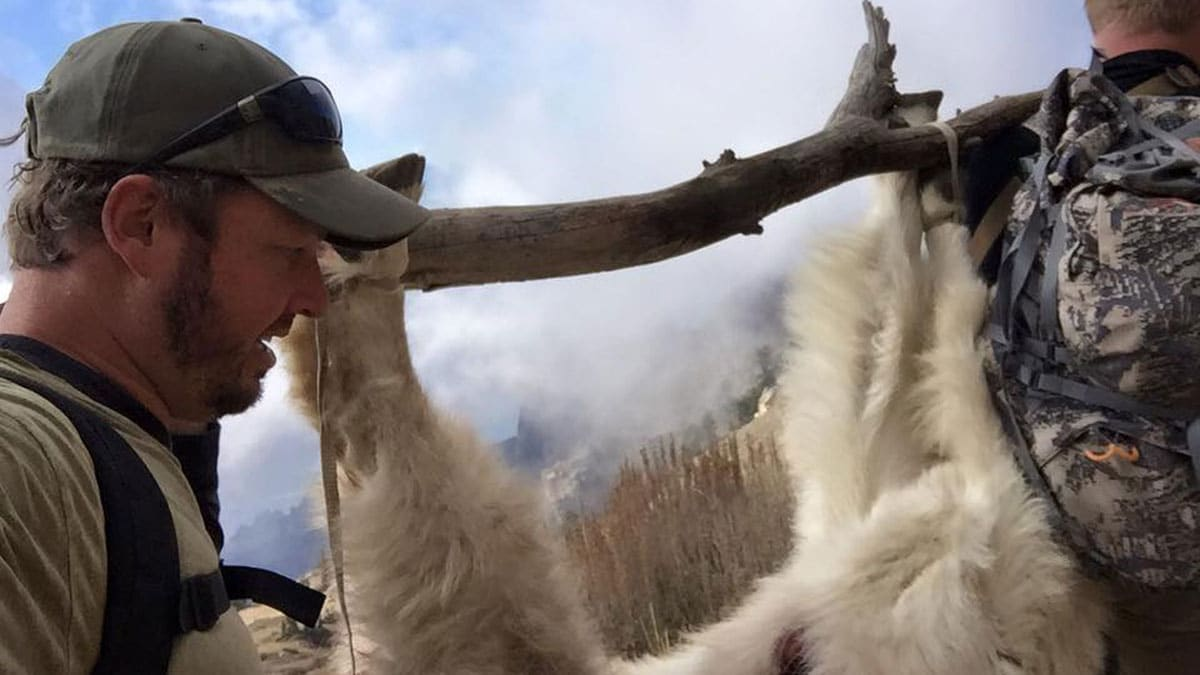 Hunters carry a goat after a successful hunt