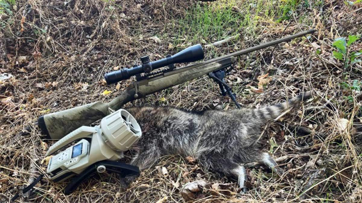 A Browning X-Bolt Rifle and the Mantis Pro game caller next to a freshly shot raccoon.