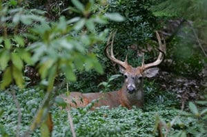 Hunting for deer on public property could prove to be fruitful in some areas.