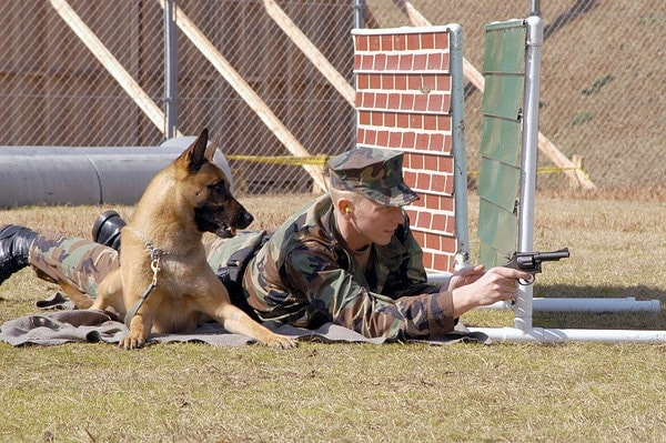 Dogs of War - A Look at the Use of Canine Corps :: Guns com