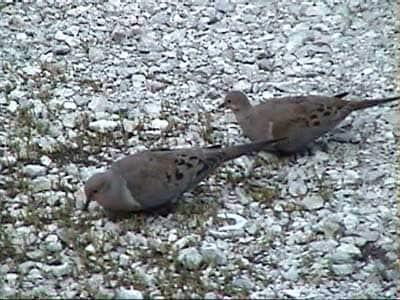 2 birds on the ground