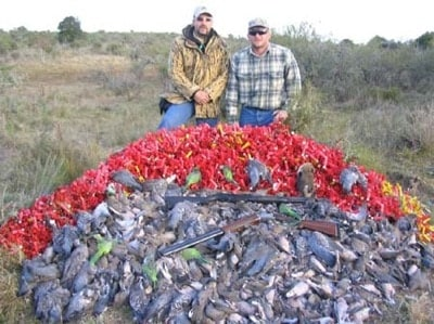 hunted doves