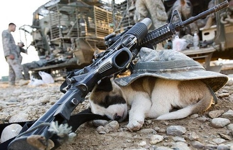 2 M4 carbines and a hat resting on top of sleeping puppy