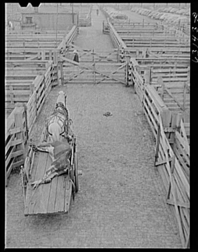 Thompson-LaGarde Tests at Union Stock yards in Chicago.