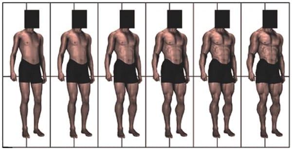 Chart of muscular men