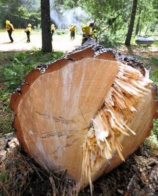 chopped wood