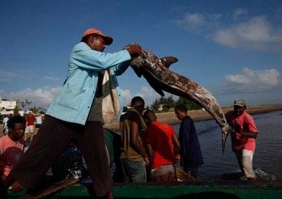 illegal trawler