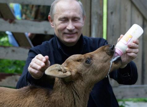 Putin feeding a baby elk