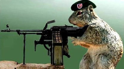 Even A Blind Squirrel Finds A Nut In Vietnam The Use Of