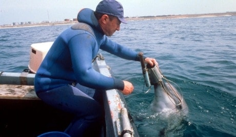 military-dolphins-4