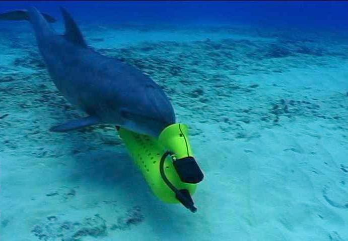 military-dolphins-5
