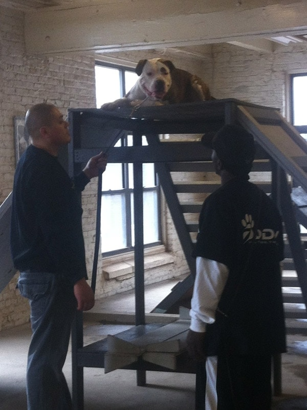 Toriano works with vet and pet on agility training at his Chicago facility