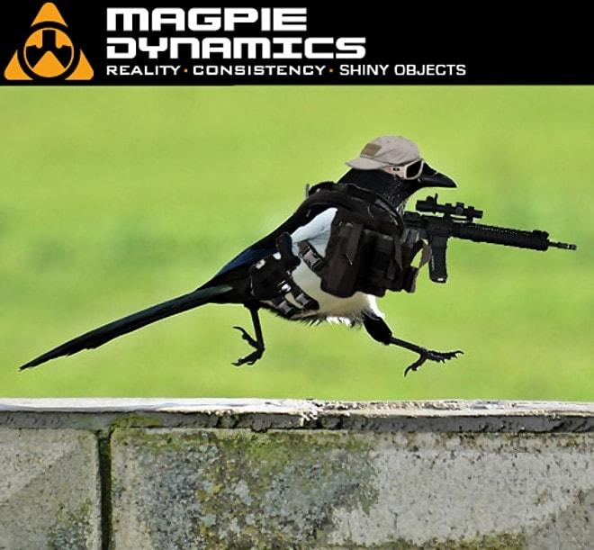 magpie_dynamics_by_tristikov