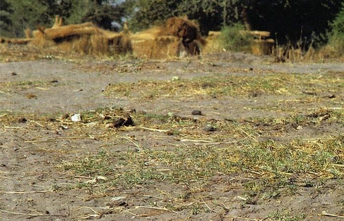1994_sudan