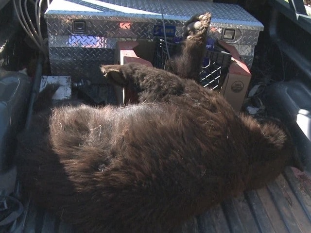 The homeowner, who said he is a bear lover, is reportedly very upset over the incident. (Photo credit: ABC, Albuquerque)