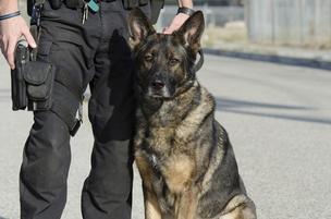 police-dog-304