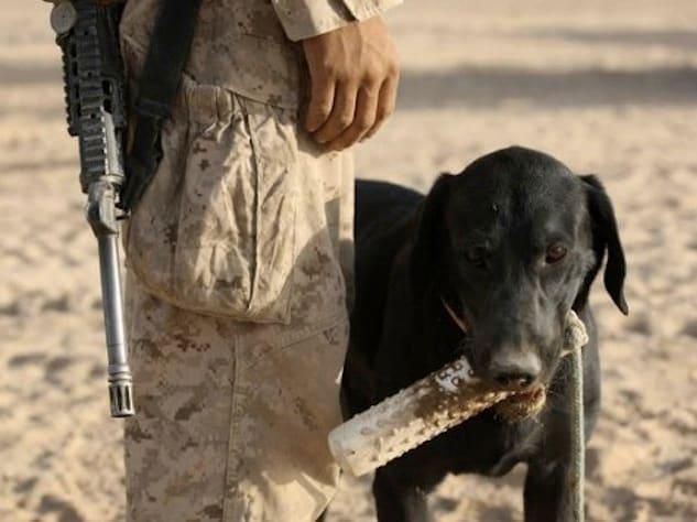 service_dog_AP