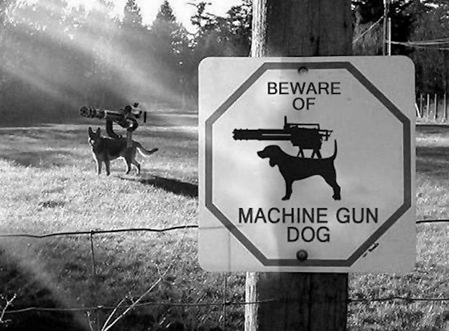 beware-of-machine-gun-dog