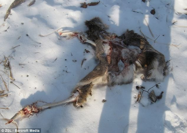 The remains of the deer were found several yards away from where the photos were taken.