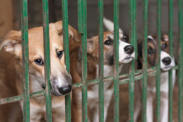 lambriar-3-cute-puppies-locked-in-cage