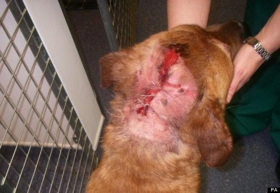 Man jailed for shooting dog