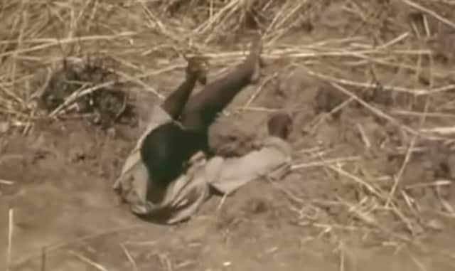 Snake Hunter Extraordinaire: Man uses his leg to bait 20