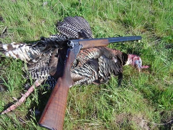 superposed shotgun pheasants