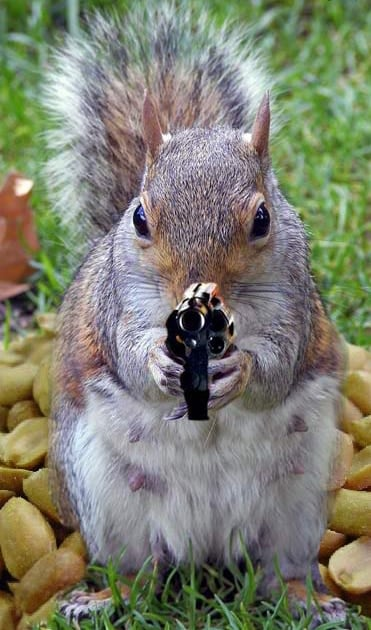 Squirrel Gun