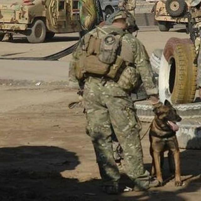military dog shot