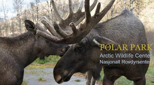 hunter shoots moose in zoo