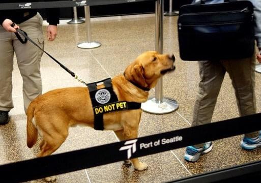 TSA-dog-3
