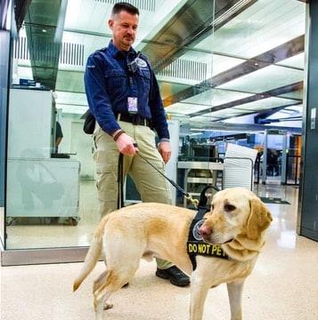 TSA-dog-4