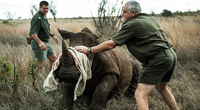 rhino poachers