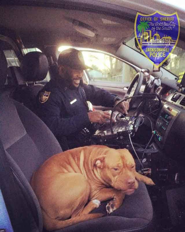 dog in police car