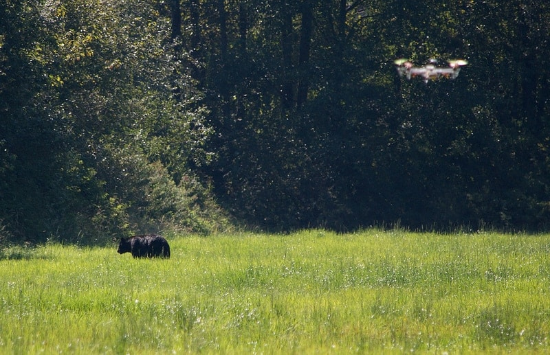 Drone and cow (Photo: John Biehler / Flickr)