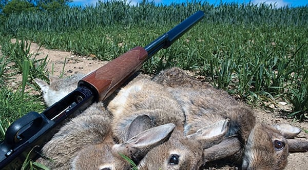 Rabbit Hunting & Shooting Tips with Air Rifles - YouTube