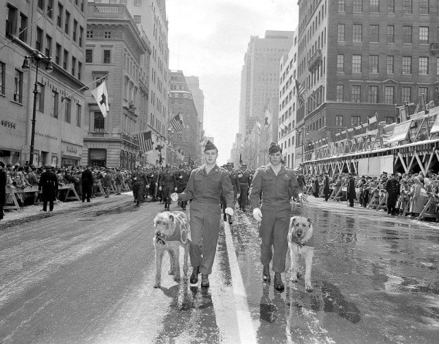 Fighting 69th leads worlds largest St. Patrick's Day parade with huge wolfhounds 2