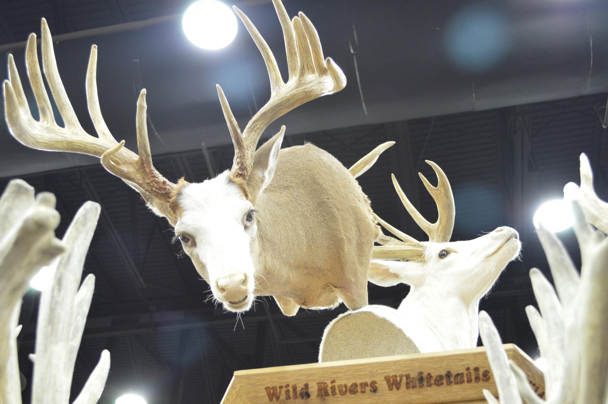 Piebald buck (Photo: Kristin Alberts/Guns.com)