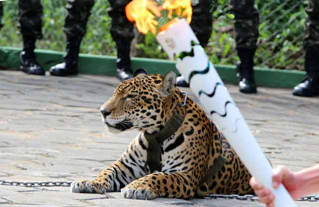 Jaguar Olympics