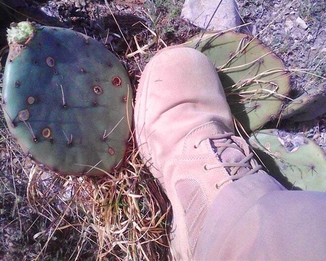 Prickly_pear_cactus--no_matter