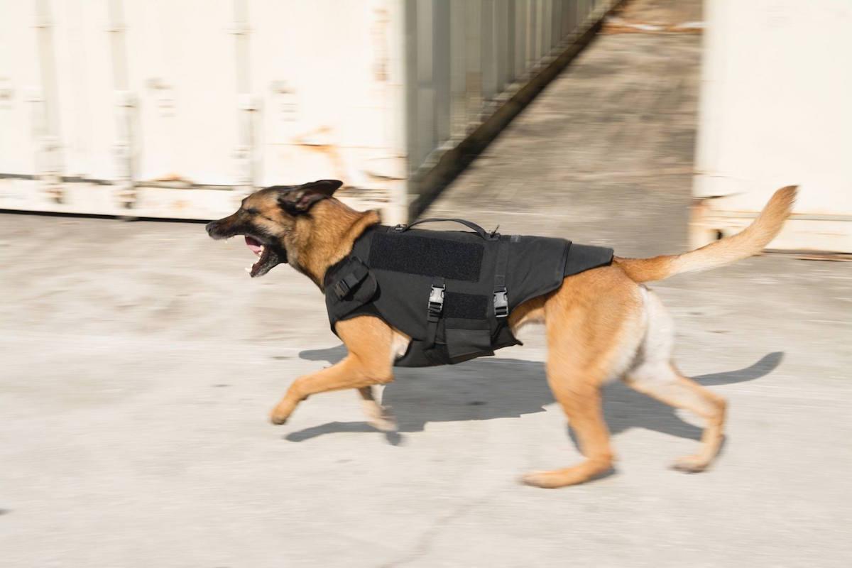 protech tactical safariland bark 9 carrier