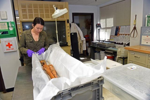 WWII Marine Raider's M1 undergoing preservation at Navy lab (4 PHOTOS)