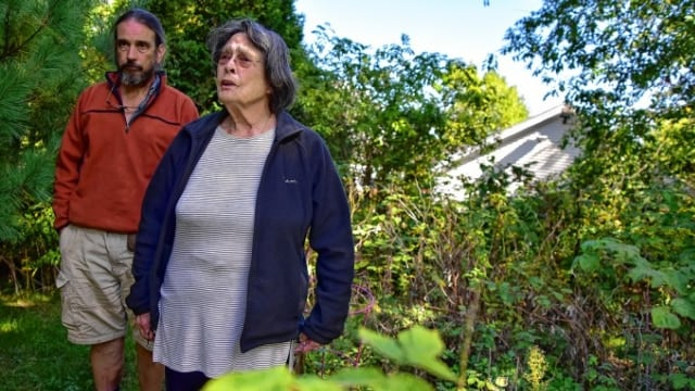Margaret Holcomb and her son Tim were paid a visit by the Mass. State Police and National Guard last month, who found a curious plant in her raspberry bushes. (Photo: Andrew J. Whitaker/Gazette Staff)