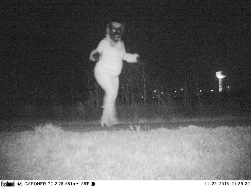 That's not a mountain lion, that's a cougar (Photos: Gardner Police Dept.)