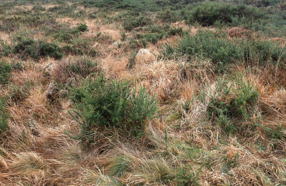 How many of Her Majesty's skrimed up Marine snipers are hidden in this image? (Photos: Royal Marines)
