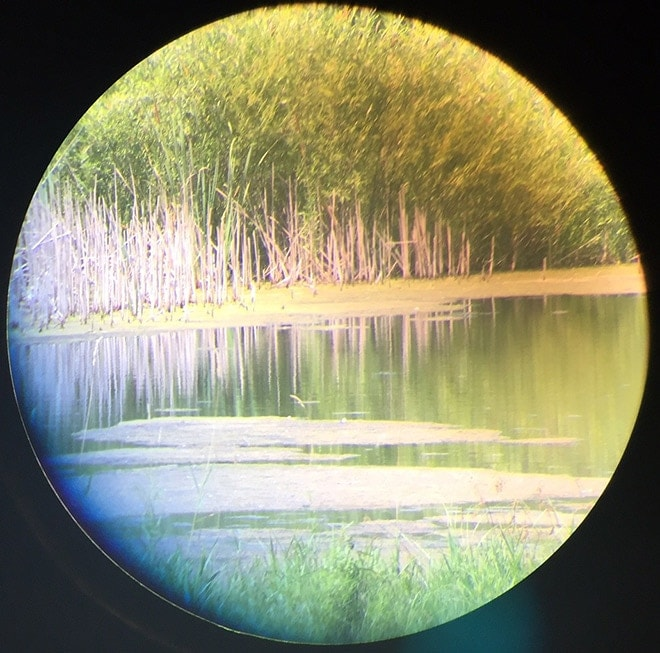 unzoomed_view_thru_spotting_scope