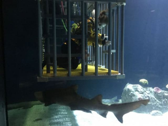 shark tank therapy